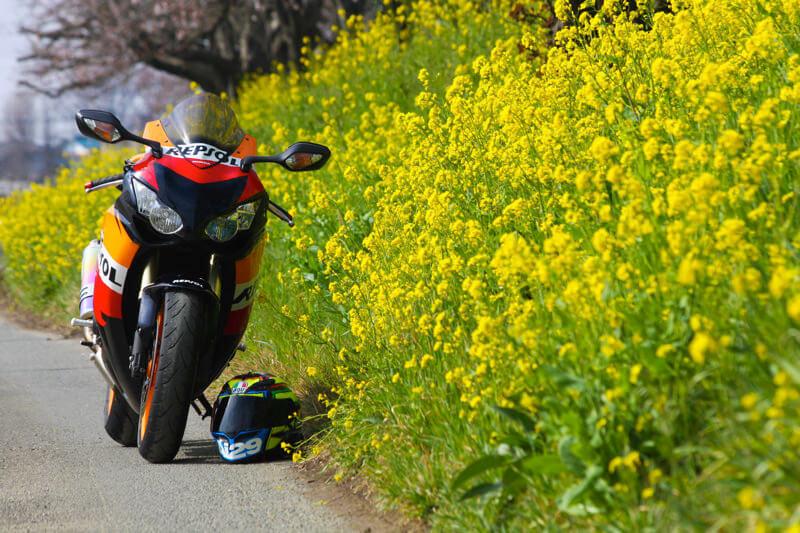 CBR1000RRと菜の花