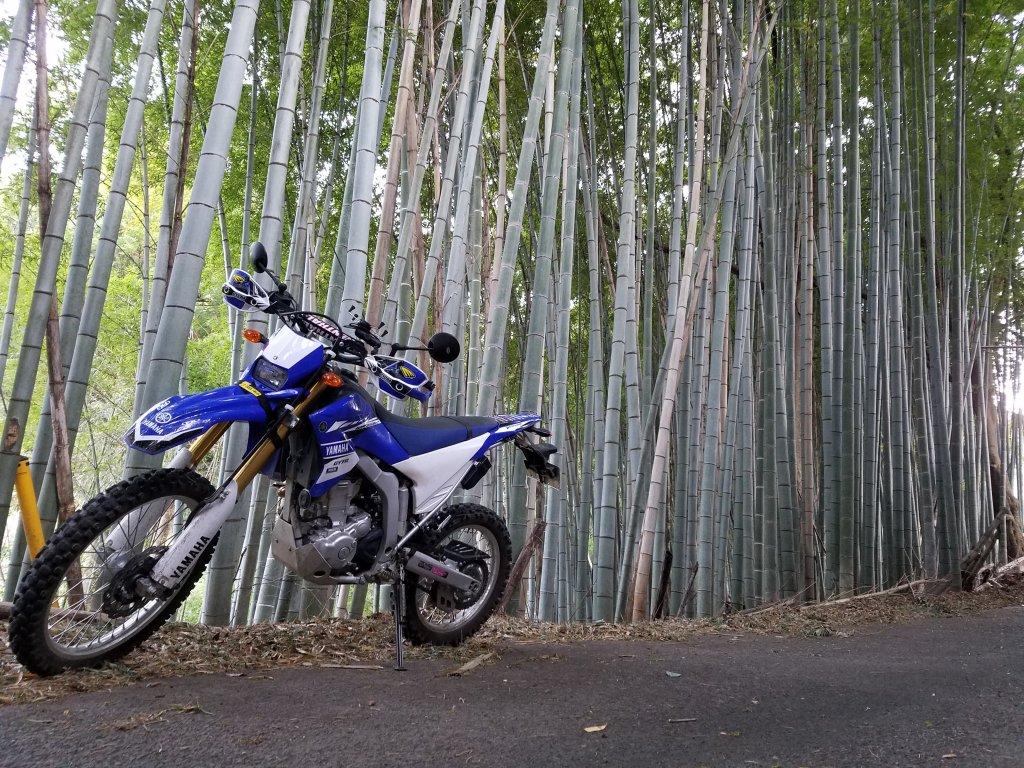 竹林とWR250R