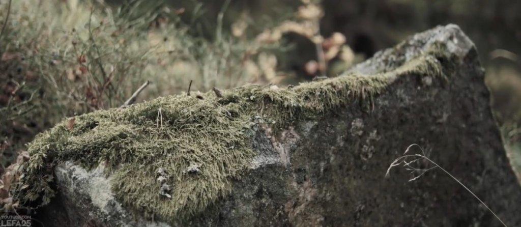苔が付着した倒木
