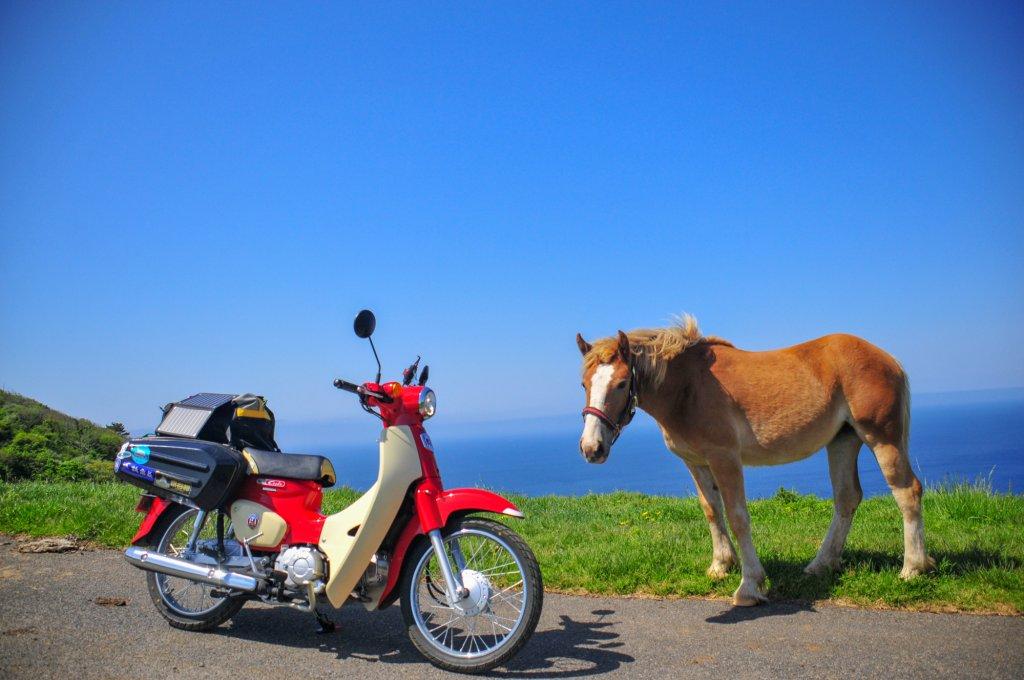 「あ、馬がいる」と思ったらすぐ止まれちゃう!